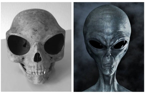 Sealand Skull: Does This Skull Belong To An Ancient Alien?