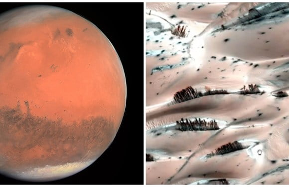 Trees Growing On Mars' Surface Reveal A Big NASA Cover-Up