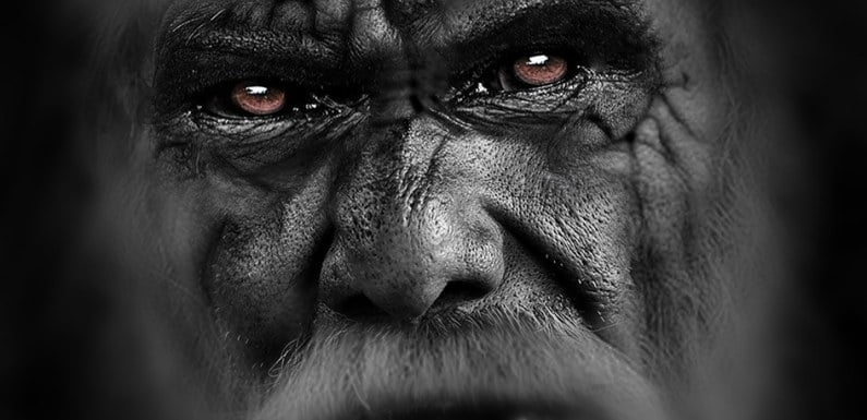 Researchers Believe Bigfoot Is An Extraterrestrial Visitor